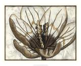 Fresco Flowerhead IV Giclee Print by Nancy Slocum
