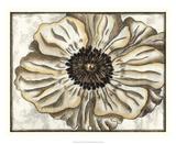 Fresco Flowerhead II Giclee Print by Nancy Slocum