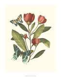 Midsummer Floral II Giclee Print