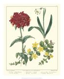 Gardener's Delight VIII Giclee Print by Sydenham Teast Edwards