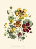 Summer Flowers I