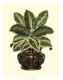 Lush Foliage in Urn II Impressão giclée