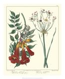 Gardener's Delight VI Giclee Print by Sydenham Teast Edwards