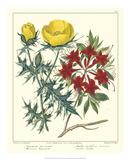 Gardener's Delight VII Giclee Print by Sydenham Teast Edwards