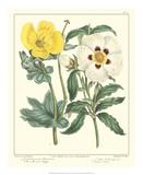 Gardener's Delight III Giclee Print by Sydenham Teast Edwards