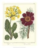 Gardener's Delight II Giclee Print by Sydenham Teast Edwards