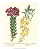 Gardener's Delight V Giclee Print by Sydenham Teast Edwards