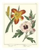 Gardener's Delight IV Giclée-Druck von Sydenham Teast Edwards