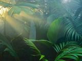 Rainforest Vegetation in Morning Light Trykk på strukket lerret av Frans Lanting