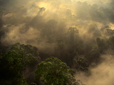 Sunrise over Lowland Rainforest, Danum Valley, Sabah, Borneo Stampa fotografica di Frans Lanting