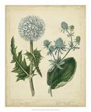 Cottage Florals III Giclee Print by Sydenham Teast Edwards