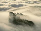 Redwoods in Fog, Monterey Bay, California Lámina fotográfica por Frans Lanting