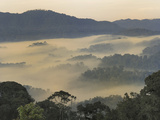 Valley Fog at Dawn in the Mountains of the Nyungwe Forest National Park, Rwanda Fotografisk tryk af Thomas Marent