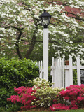 Azaleas and Flowering Dogwood Tree Along White Picket Fence Fotografisk tryk af Adam Jones