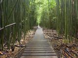 Boardwalk Trail Through a Bamboo Forest on Maui, Hawaii, USA Fotografisk trykk av Patrick Smith