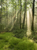 Deciduous Forest with Rays of Sunlight, Bald Eagle State Park, Pennsylvania, USA Photographic Print by Joe McDonald