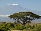 Acacia and Savanna Vegetation in Front of Mount Kilimanjaro, Kenya, Africa Fotografisk trykk av Joe McDonald