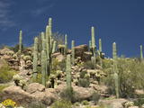 Sonoran Desert, Arizona, USA Reproduction photographique par Tom Walker