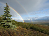 Double Rainbow, Denali National Park, Alaska Range Mountains, Alaska, USA Reproduction photographique par Tom Walker