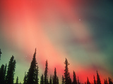 Aurora Borealis or Northern Lights, Alaska, USA Reproduction photographique par Tom Walker