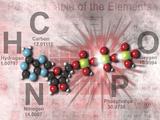 Adenosine Triphosphate Molecular Model Showing High Energy Bonds with a Periodic Table of Elements Fotografisk tryk af Carol & Mike Werner