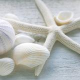 Driftwood Shells III Poster von Bill Philip
