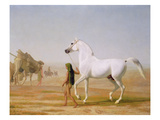 The Wellesley Grey Arabian Led Through the Desert, c.1810 Giclee Print by Jacques-Laurent Agasse