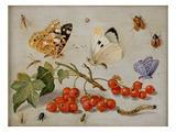 A Still Life with Sprig of Redcurrants, Butterflies, Beetles, Caterpillar and Insects Lámina giclée por Jan Van, The Elder Kessel