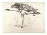 Old Cedar Tree in Botanic Garden, Chelsea, 1854 (Pencil on Paper) ジクレープリント : サミュエル・パーマー