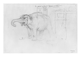 Album of the Siege of Paris, Elephant (Pen and Brown Ink Wash and Pencil on Paper) Giclée-tryk af Gustave Doré