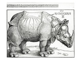 The Rhinoceros, 1515 (Woodcut) Giclee Print by Albrecht Dürer
