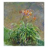 Hemerocallis, 1914-17 Giclee Print by Claude Monet