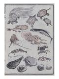 Undersea Creatures, from a Manga (Colour Woodblock Print) Giclée-tryk af Katsushika Hokusai