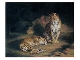 A Pair of Leopards, 1845 Giclée-tryk af William Huggins