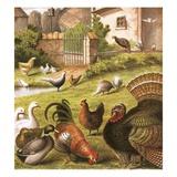 Poultry at a Farm Reproduction procédé giclée par  English