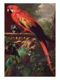 Scarlet Macaw in a Landscape Giclée-tryk af Jakob Bogdani Or Bogdany