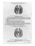 Vascular System of the Brain Giclée-Druck von Andreas Vesalius