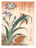 Kingfisher, Irises and Pinks (Colour Woodblock Print) Giclée-tryk af Katsushika Hokusai