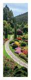 Butchart Gardens, Victoria, British Columbia Posters av Jeff Maihara