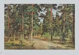 Pine Forest Samlertryk af Iwan Iwanowitsch Schischkin
