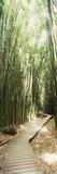 Trail in a Bamboo Forest, Hana Coast, Maui, Hawaii, USA Fotografie-Druck