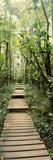 Bamboo Forest, Oheo Gulch, Seven Sacred Pools, Hana, Maui, Hawaii, USA Valokuvavedos