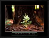 Determination: Little Pine Posters