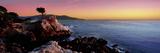 Silhouette of Lone Cypress Tree at a Coast, 17-Mile Drive, Carmel, Monterey County, California, USA Lámina fotográfica