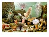 Sea Anemones Posters by Giacomo Merculiano