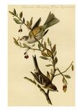 Canada Bunting Tree Sparrow Poster by John James Audubon