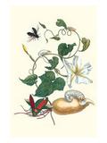 Moonflower with Giant Metallic Ceiba Borer and a Horned Passalus Beetle Posters tekijänä Maria Sibylla Merian