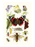 Blue Butterfly, Red Admiral, Firetail and Sun Beetle Plakater af James Sowerby
