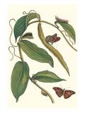 Flat-Leaved Vanila Plant with a Gulf Fritillary Posters tekijänä Maria Sibylla Merian
