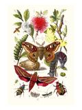 Emperor Moth, Elephant Hawk Moth, Tortoise Beetle Poster af James Sowerby